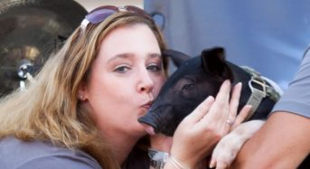 Kiss-A-Pig Contest Raises Over $40,000  for Boys & Girls Clubs of Harford County