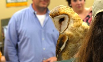 HARFORD GOES WILD AT 'NIGHT WITH THE WILD' GALA SUSQUEHANNOCK WILDLIFE SOCIETY RAISES FUNDS FOR REGIONAL WILDLIFE CENTER